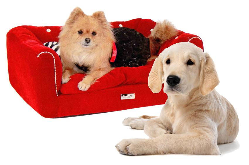 Cuccia divanetto per cani di taglia media raffinata for Divano per cani